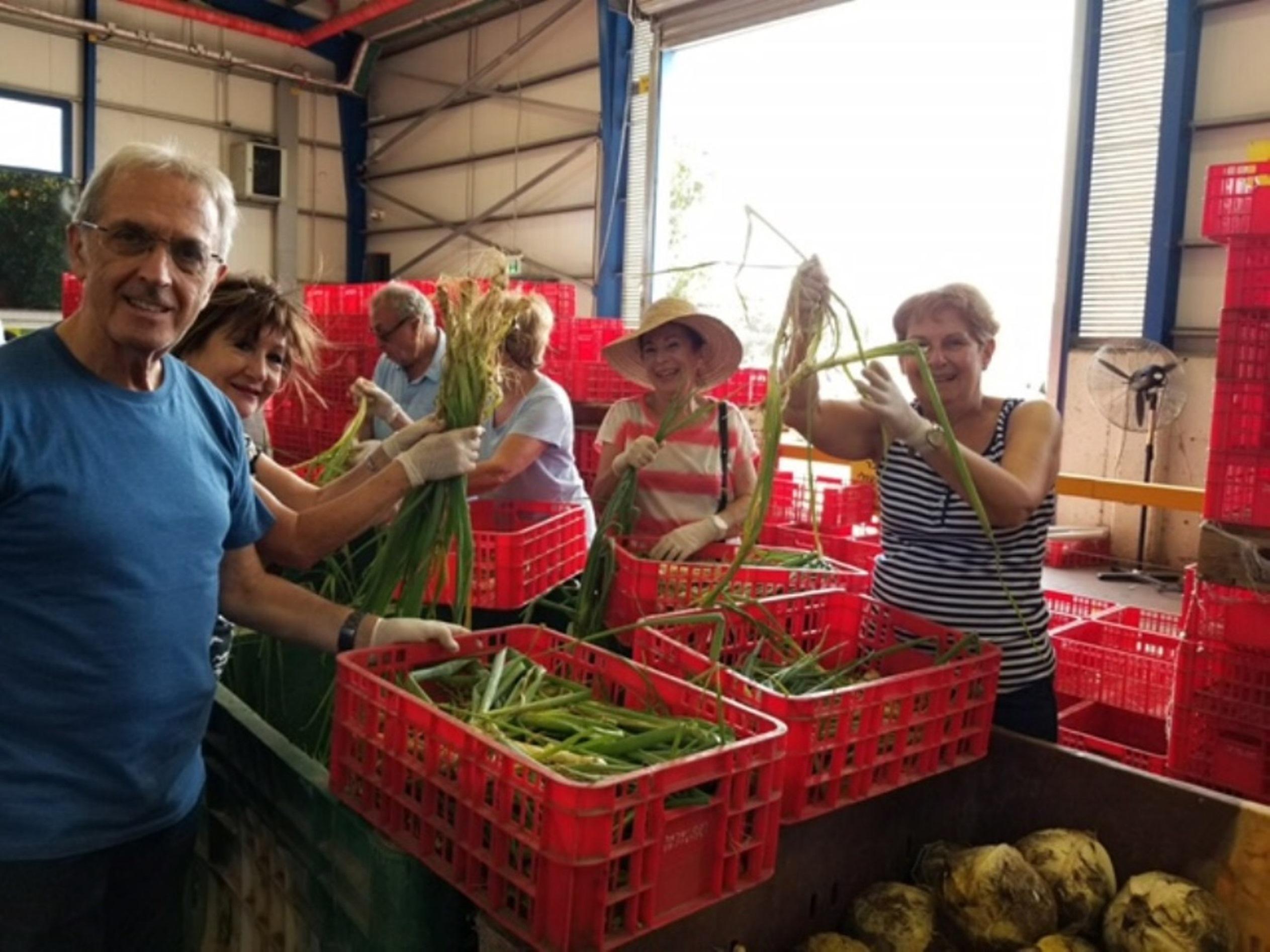 ממיינים ברינה.... קהילת פולג מתנדבת במרלוג צילום מאגר לקט ישראל.