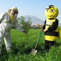 נטיעות טו בשבט בדבורת התבור 1