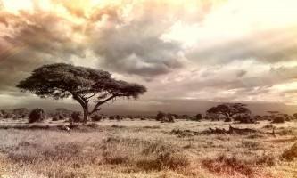 3 טיולים שאפשר לעשות באפריקה